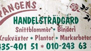 Spångens Handelsträdgård 2017 musik Danne Stråhed o Peps