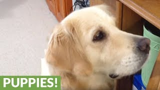 Dog gets emotional watching video of crying puppy