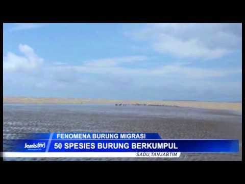 Pantai Cemara Jadi Tempat Persinggahan Burung Migrasi