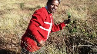 Grass Hills Valparai Akkamalai Amazing Video