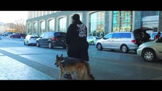 5-Year Old German Shepherd, Sasha!  German Shepherd Dog Trainers in Virginia | Off Leash K9 Training