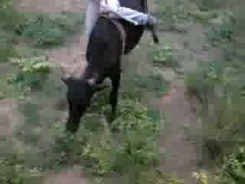 Darlei vs Boneco Doido rodeio em touros