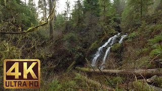 4K Forest Waterfalls Relax Video - Quinault Rain Forest Loop Trail. Waterfalls - 2.5 HRS