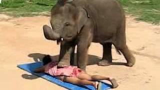 Thai Elephant Massage - by a Cute Baby Elephant in Koh Samui