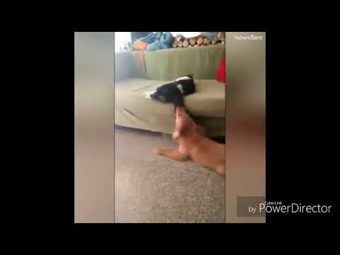 Xxx Mp4 Funny Cat And Dog Fight Funny Cat Video Best Funny Video 3gp Sex