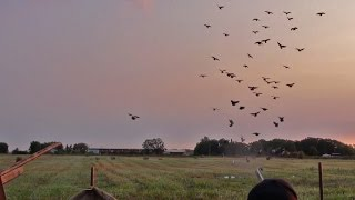 Pigeon Hunting- 3 Man Minnesota Record