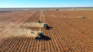 2018 peanut harvest.