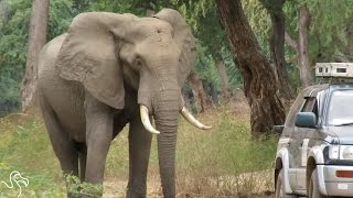 Elephant Shot In Head Asks People For Help
