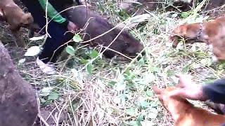 Berburu babi hutan expedisi jawa tengah (Pasirbatang Grup) 26 Juli 2015