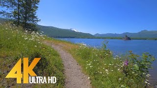 4K Nature Walk - 4.5 HRS Forest/River Fabulous Views with Calm Music and Birds Chirping