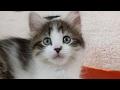 Download Lagu Close Up Kittens 2017-04-24