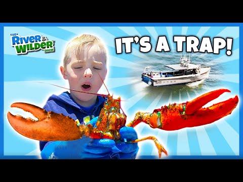 Xxx Mp4 Lobster Pinch River Amp Wilder Go Lobster Fishing In PEI 3gp Sex