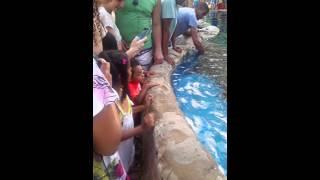 Menina de coragem  passando a mão no tubarão
