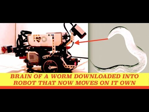 Xxx Mp4 Brain Of A Worm Downloaded Into Robot That Moves On Its Own 3gp Sex