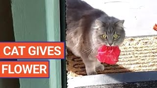 Cat Surprises Owner With Flower | Daily Heart Beat