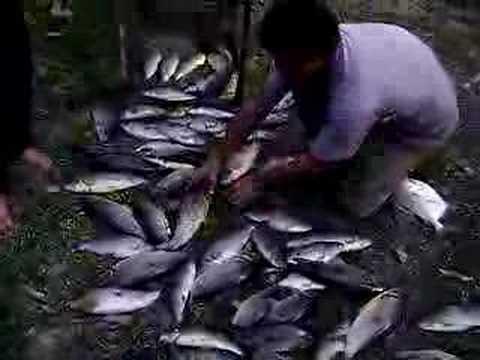 Pescaria do Piau