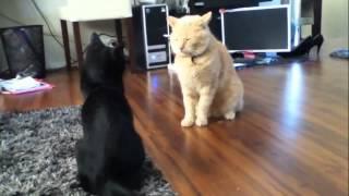 Smešne mačke video kompilacija 2014