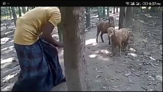 New Funny bangla video 2017