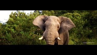 The Beauty of South Africa - Travel Video ● 4K