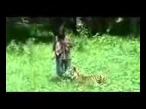 tiger fuck
