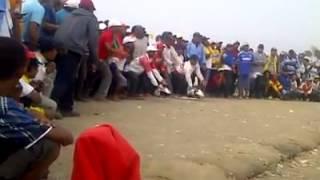 Lomba Merpati Balap Sprint kencang Tembak Keras