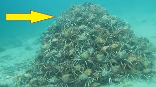 Divers Think Everything Is Normal In The Water Until They Spot This Pile Of Nightmares