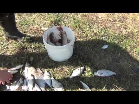 рыбалка на ветлуге на фидер видео