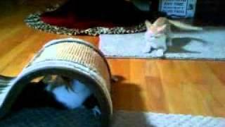 Cleo & Burnsy Playfighting