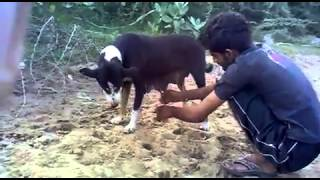 Funny. Nice and Time pass videos(10)