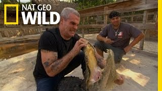Henry Rollins Learns to Wrestle | Animal Underworld