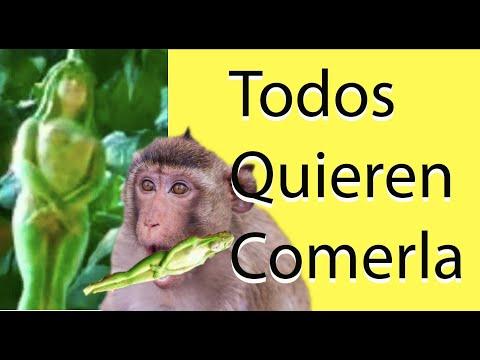 NARILATHA La Planta Con Forma De Mujer