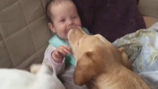 Adorable Babies and Dogs Playing Together - TRY NOT TO LAUGH and AWW!