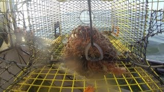 GoPro Camera in  a Lobster Trap.....104 feet deep