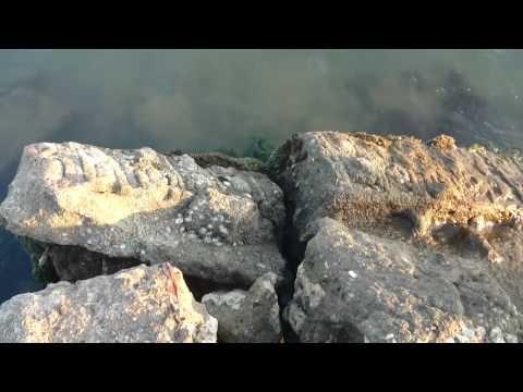 Playa Berruga San Onofre Sucre
