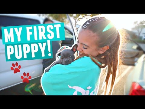 FINALLY GETTING MY PUPPY!! Cutest Blue French Bulldog Puppy Reaction
