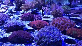 Local reef store visit aqua visions Algonquin IL - saltwater tank care