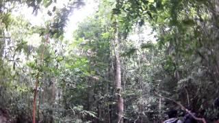 Perjalanan ke Air Terjun Kepalak Kawai II (Jalan Kaki)