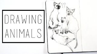 Drawing Animals · 30 Ways to Fill a Sketchbook · SemiSkimmedMin