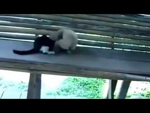 Xxx Mp4 Funny Monkey Plays With Cat 3gp Sex
