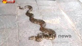 Python in Tirumala Narayana GIri Svs Gust House