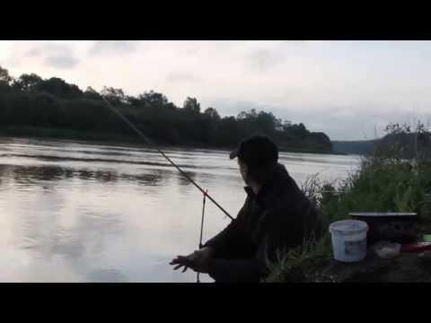 поклевка на фидер на реке видео