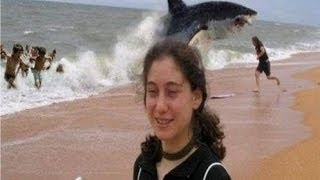 Top 5 Shark Attack Beaches