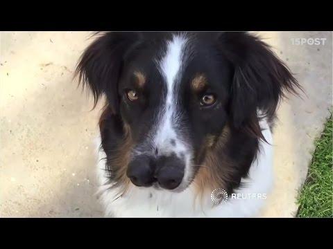 Toby el perro de dos narices es muy feliz 15 POST