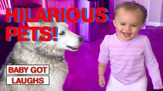 Babies Laughing at Pets | Cute Babies and Animals Compilation