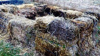 Compost - homemade organic fertilizer