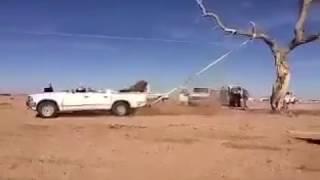 شاب يقتلع شجرة معمّرة من جذورها بعد أن ربطها بسيارته وسط صيحات التشجيع من أصدقائه