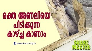 Vava Suresh Caught a Brown Tree Snake & Russell