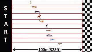 Speed Comparison : Race Simulation