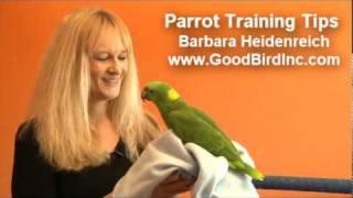 Parrot Training Tips - Towel Training