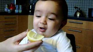 Persian baby and the Lemon